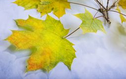 Bunte Blätter im Fall auf hölzernes Brett der bunte Hintergrund Lizenzfreie Stockfotografie