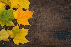 Bunte Blätter im Fall auf hölzernes Brett der bunte Hintergrund Stockbilder