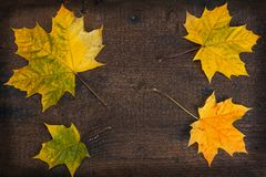 Bunte Blätter im Fall auf hölzernes Brett der bunte Hintergrund Stockfotografie