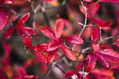 Bunte Blätter im Garten, Herbstzeit Lizenzfreie Stockfotos