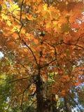 Bunte Blätter im Herbst Stockbilder