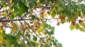 Bunte Blätter im Herbst stock video