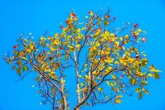 Bunte Blätter im Herbst mit blauem Himmel Stockfoto