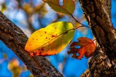 Bunte Blätter im Herbst mit blauem Himmel Lizenzfreies Stockbild