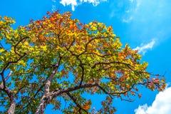 Bunte Blätter im Herbst mit blauem Himmel Lizenzfreies Stockfoto