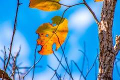 Bunte Blätter im Herbst mit blauem Himmel Lizenzfreie Stockfotos
