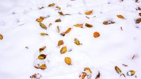 Bunte Blätter im Schnee Stockfotos