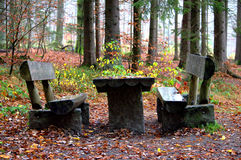 Bunte Blätter im Wald Stockfoto