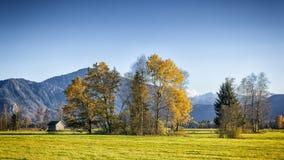 Bunte Blätter im Wald Lizenzfreie Stockbilder