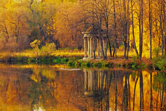 Bunte Blätter im Wald Stockfotos