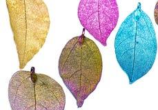 Bunte Blätter im weißen Hintergrund lizenzfreies stockfoto