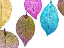 Bunte Blätter im weißen Hintergrund lizenzfreies stockbild