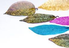 Bunte Blätter im weißen Hintergrund stockfotos