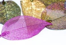 Bunte Blätter im weißen Hintergrund stockbilder