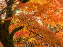 Bunte Blätter in Japan-Herbst lizenzfreie stockfotos