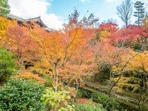 Bunte Blätter mit japanischem Pavillon Lizenzfreies Stockbild