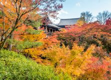 Bunte Blätter mit japanischem Pavillon Stockfoto