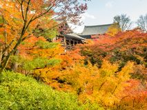 Bunte Blätter mit japanischem Pavillon Lizenzfreie Stockbilder