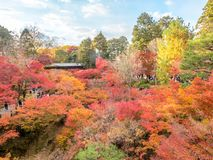Bunte Blätter mit japanischem Pavillon Stockfotografie