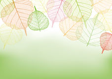Bunte Blätter mit Kopienraum Stockfoto