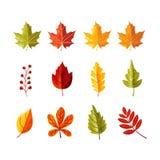 Bunte Blätter mit Kornschatten für Herbstsaison vektor abbildung