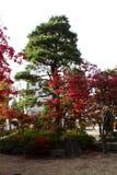 Bunte Blätter von Bäumen im japanischen Garten Stockbild