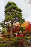Bunte Blätter von Bäumen im japanischen Garten stockfoto
