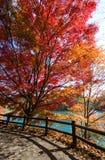 Bunte Blätter von Bäumen am Seeufer im Herbst Stockbilder