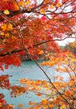 Bunte Blätter von Bäumen am Seeufer im Herbst Lizenzfreies Stockfoto