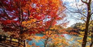 Bunte Blätter von Bäumen am Seeufer im Herbst Lizenzfreie Stockfotos