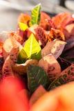 Bunte Blätter von Codiaeum variegatum Stockfotografie
