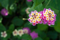 Bunte blühende Blumen Lizenzfreie Stockbilder
