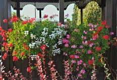Bunte blühende Blumen auf Hüttenregal stockbild