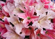 Bunte blühende Musterbeschaffenheit der Rosa- und weißerlilly Gewebeblumengruppe für Hintergrund stockfotografie