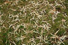 Bunte Blattbeschaffenheit im Herbst Stockfoto