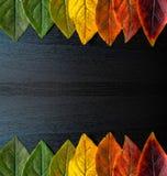 Bunte Blattnahaufnahme auf einem schwarzen Hintergrund Lizenzfreie Stockfotografie