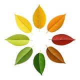 Bunte Blattpalette des Herbstes Stockbild