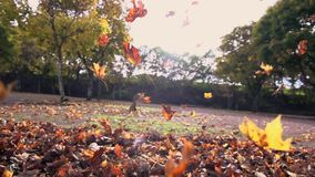 Bunte Blattzeitlupe der Herbstlaubherbstsaisonnatur stock video footage
