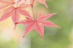 Bunte Blätter Lizenzfreie Stockbilder