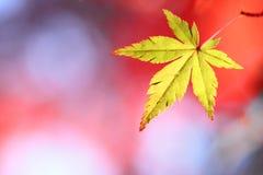 Bunte Blätter Lizenzfreie Stockfotos