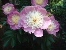 Bunte Blume 1 stockfotos