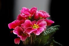 Bunte Blume Lizenzfreie Stockfotografie