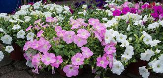 Bunte Blume Stockfoto