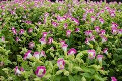 Bunte Blume Stockfotos