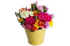 Bunte Blume auf weißem Hintergrund Lizenzfreies Stockfoto