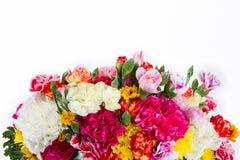 Bunte Blume auf weißem Hintergrund Stockbilder