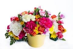 Bunte Blume auf weißem Hintergrund Stockfoto