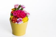 Bunte Blume auf weißem Hintergrund Stockfotografie