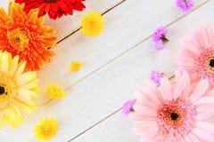 Bunte Blume frischen Frühlingsblumen Gerbera verschieden auf hölzernem weißem Hintergrund lizenzfreies stockbild