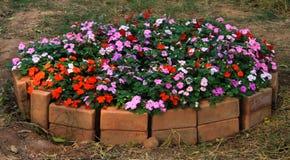 Bunte Blume im Blumentopf Stockfotos